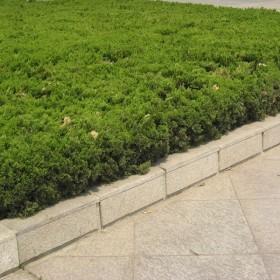 黄锈石花坛石
